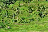 Open a Company in Agriculture in Malaysia image